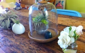 Air Plant Tablescape