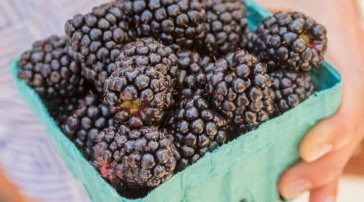 Berries: How to buy, store, and cook